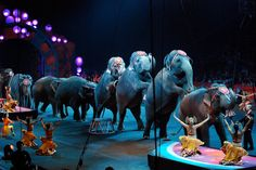 Woohoo! The Netherlands Bans Use of Wild Animals in Circuses | One Green Planet