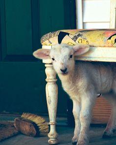 Conseils pour entretenir le lambswool, la laine d'agneau entretien de celle ci avec les meilleurs son et en prendre soin au quotidien facile et rapide.