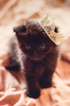 I love me some black kitties. Missing my Binx baby <3