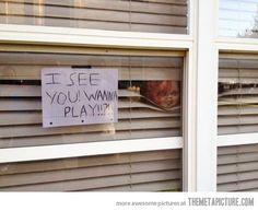 My neighbor takes Halloween very seriously…