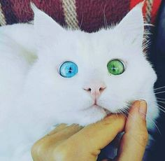 Very interesting post: TOP 36 Cats and Kittens. Also dompiсt.сom lot of interesting things on Funny Cat.