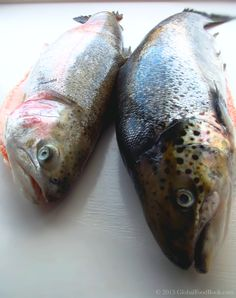 Yellowfin tuna tuna and southern bluefin tuna on pinterest for Oily fish representative species