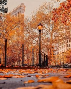 Autumn in NYC, inspiration for #Dragon'sKiss book 2 of the #DragonFate novels #paranormalromances featuring #dragonshifters by #DeborahCooke
