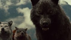 Twilight Wolves | Computer Graphics World - Breaking Dawn's CG Wolf Pack