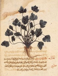 The earliest nature print, on a leaf inserted into a manuscript of Dioscorides, copied in Anatolia or northern Syria by Bihnam the Christian in AD1228. Whether this leaf is contemporary or was inserted later is still debated, and no other examples of nature printing from the Islamic world have come to light