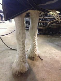 If you have a friesian or cyleasdale you could probably do that! DIY: pretend like your doing a french braid on the leg.