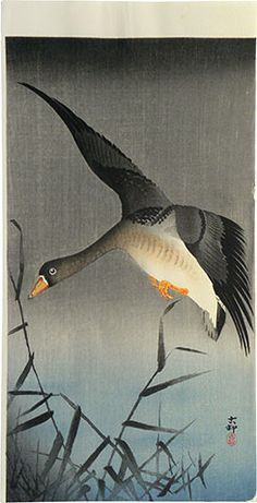 Ohara Koson, Shoson, 1877-1945  White-fronted goose descending over reeds