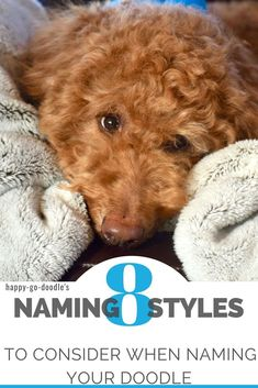 Searching for a name for your goldendoodle or dog that's as perfect as your new pup? We created and sorted a mega list of doodle dog names into 8 styles or categories that are based on a pup's personality, lifestyle, and physical appearance! Cute Dog Names Boy, Puppy Names, Cute Dogs, New Puppy, Puppy Love, Goldendoodle Names, Dogs Names List, Poodle Mix Breeds, Golden Doodle Dog