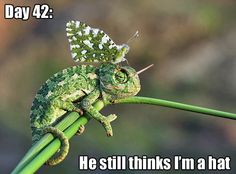 Chameleon with moth on its hesd [via] Tastefully Offensive