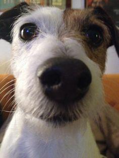 Aww looks like Eddie from tv show Frasier. So cute