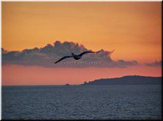 Fotos Con Cariño: Gaviota anunciando el amanecer. Al fondo: Estaca d...