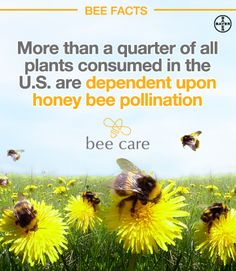Join Bayer and make a commitment to support pollinators. The Bayer Bee Care Tour fosters education and awareness about the importance of honey bees and promotes bee health and encourages pollination. #BayerBeeTour