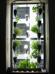 Window farm