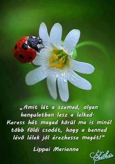 Inspirational Qoutes, Karma, How To Memorize Things, Afrikaans, Ladybugs, Islam, Spanish, Texts, Christ
