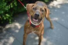 Want to see this smiling face every time he knows he's coming for the ride? Consider adopting from @ASPCA.