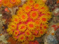 Great Barrier Reef, Australia, Orange Corals #TrollbeadsWorldTour
