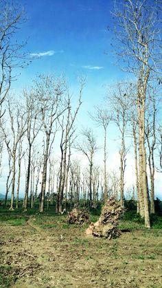 #landscape #papuma #indonesia #jawatimur #jember