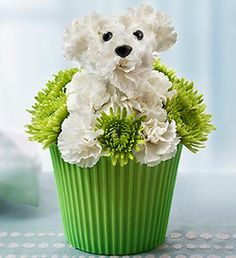 exclusive floral canine cupcake, hand-crafted from fresh mini carnations and poms, combines our playful a-DOG-able® arrangement--Pup-cake in Bloom™ Beautiful Flower Arrangements, Floral Arrangements, Beautiful Flowers, Ikebana, Frise Art, Congratulations Flowers, Puppy Flowers, Mini Carnations, Thank You Flowers