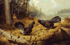 """The Fighting Capercaillies"" / ""Taistelevat metsot"", 1886 -oil on canvas- Ferdinand von Wright - Ateneum Finland Forest Scenery, Google Art Project, Ferdinand, Bird Art, Art Google, Art History, Art Museum, Oil On Canvas, Flora"