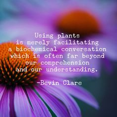 Plant Quotes Life Inspiration Thoughts