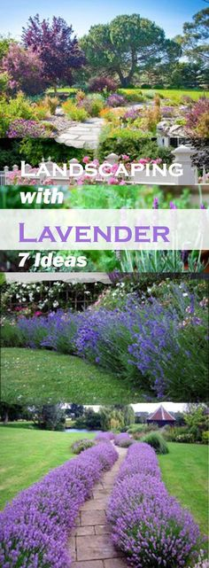 Landscaping with Lavender. Labor Junction / Home Improvement / House Projects / Garden / Backyard / House Remodels / www.laborjunction.com