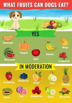10 Best Fruits for Dogs Fruit Dogs Can Eat, Foods Dogs Can Eat, Toxic Foods For Dogs, Fruits For Dogs, Dog Fruit, Frozen Dog Treats, Dog Collar Tags, Yorky, Dog Health Care