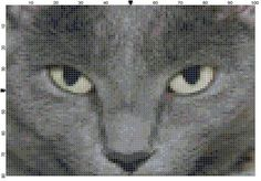 Gray Burmese Cat Cross Stitch Pattern by theelegantstitchery, $15.00 Cute Cross Stitch, Cross Stitch Patterns, Needlecrafts, Kittens, Cats, General Crafts, Burmese, Cross Stitching, My Etsy Shop