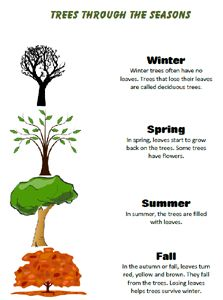 Free Learn about the Seasons Worksheets Science Lessons, Science Projects, Science Ideas, Seasons Lessons, Calendar Skills, Seasons Worksheets, Teaching Skills, Fall Preschool, Learning Time