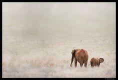 Africa von Daniel Rohr
