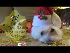 #DIY #Traje #Navideño y #gorrito para #Perritos, #coton de %tulear - #Lorentix channel - #YouTube #christmasoutfit #MerrychristmasDogs #DogChristmas