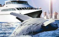 It was so awesome to go on the Whale watching cruise together!