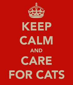 Care for cats