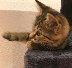 Cats, Animals, Interesting Facts, Gatos, Animales, Animaux, Animal, Cat, Animais