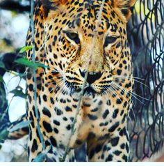 Wildlife Photography at Van Vihar by @themetallicframes