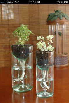 bouteilles en verre comme pot de fleur!