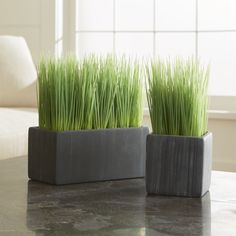 Shop Potted Grasses.  Row up these pots of faux grass for a modern twist on Easter décor or as an all-year interior accent.  Cement pot adds a rustic feel to its contemporary shape.