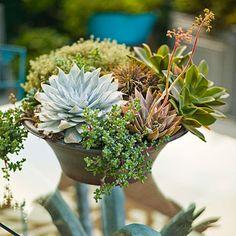Cactus Garden with Succulents