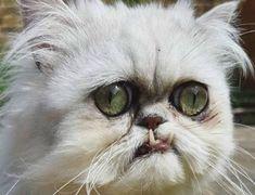 Los Mejores Memes De Gatos Gatos Curiosidades Animales Meme Gato