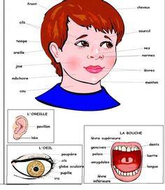 mes organes | Education de base (apprendre le français ) | Pinterest