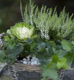 Vackra höstblommor | Blomsterlandet.se