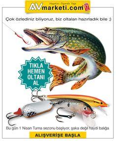 Turna balığı avı ne zaman serbest ? Turna balığı avı ne zaman yasak? Turna balığında avlanma limiti nedir? Turna balığı için olta önerileri? Turna balığı nerelerde bulunur? Turna balığı için en iyi olta kaşığı ve suniyemler hangileri?  Turna avcılarının merak ettiği bu soruların yanıtları bu yazımızda. Sürdürülebilir avcılık için lütfen balık avı sirkülerinde yazan kurallara dikkat edelim. https://www.avmarketi.net/turna-baligi-av-sezonu-basliyor.html