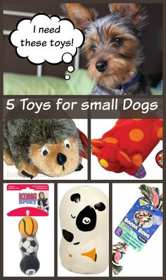 5 Small Dog Toys Your Dog Can't Live Without - Dog Vills - Dog toys - Hunde Cute Dog Memes, Cute Funny Dogs, Cute Cats And Dogs, Really Cute Puppies, Cute Little Puppies, Small Dog Toys, Small Dogs, Small Breed, Large Dogs