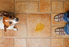 Os melhores produtos para remover os odores dos animais de estimação                                                                                                                                                                                 Mais