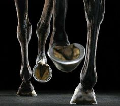 Amazing perspective of a horse's hooves.