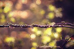 Nature bokeh vines green wall art print by PhotographybyAllison #fpoe