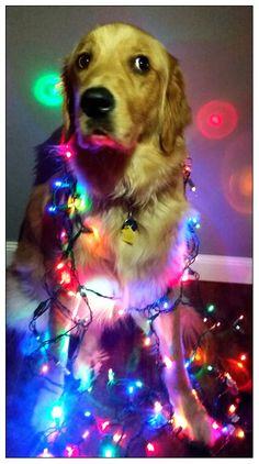 Merry Christmas Dog, Christmas Animals, Rainbow Dog, Bright Lights, Cute Baby Animals, Dog Stuff, Funny Dogs, Doggies, Cute Babies