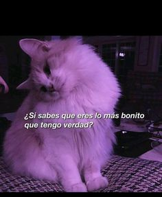 Cute Memes, Cute Quotes, Frases Tumblr, Mood Pics, Bad Feeling, Country Art, Aesthetic Backgrounds, Cute Cats And Kittens, Sad Love