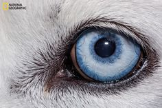 Eyes are often called 'windows into the soul,' but a more fitting title might be 'windows into evolution.'