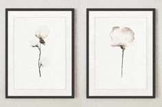 Set of 2 Cotton bolls Natural floral painting by ColorWatercolor