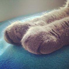 ネコの「おてて」が可愛すぎる! 丸っこくて「ポフっ」とした猫の前足を集めてみた! - ぬこわん跡地・旧ねこ・わん